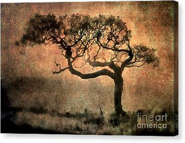 Textured Tree In The Mist Canvas Print by Ray Pritchard