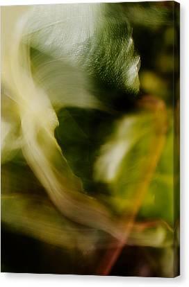 Yak Canvas Print - The Bear by Mah FineArt