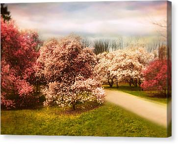 The Cherry Orchard Canvas Print by Jessica Jenney