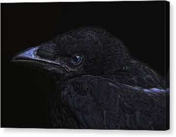 The Crow Canvas Print by Joachim G Pinkawa