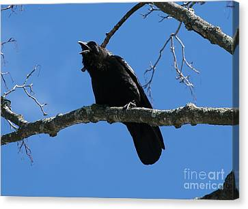 Crows Canvas Print - The Crow by Neal Eslinger