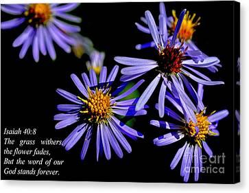 The Flower Fades Canvas Print by Thomas R Fletcher