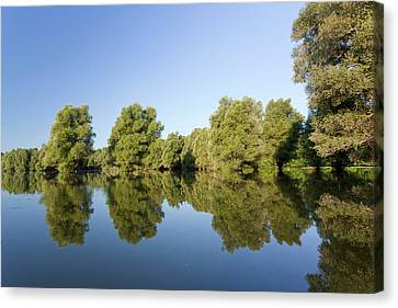 Flooding Canvas Print - The Gemenc Forest In The Danube-drava by Martin Zwick