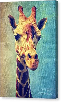 The Giraffe Canvas Print by Angela Doelling AD DESIGN Photo and PhotoArt