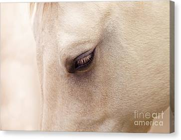 The Guardian Of My Heart Canvas Print by Sharon Mau