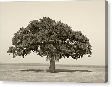 The Lonely Tree Canvas Print by Charles Beeler