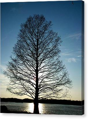 The Lonely Tree Canvas Print by Lucy D