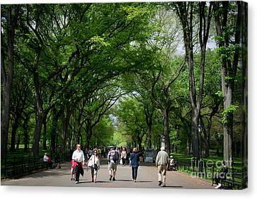 The Mall Central Park Canvas Print by Amy Cicconi