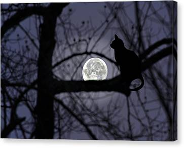 The Moon Watcher Canvas Print by Susan Leggett