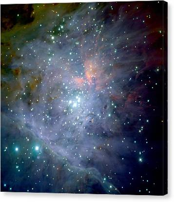The Orion Nebula Canvas Print by Celestial Images