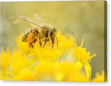 The Pollinator Canvas Print by Fraida Gutovich