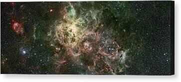 The Tarantula Nebula Canvas Print by Celestial Images