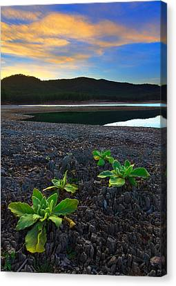 Canvas Print featuring the photograph The Way Of Life by Kadek Susanto