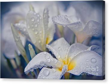 Canvas Print featuring the photograph The Wind Of Love by Sharon Mau