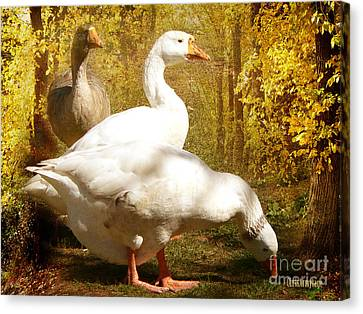 Canvas Print featuring the photograph Three Geese A Grazing by Chris Armytage