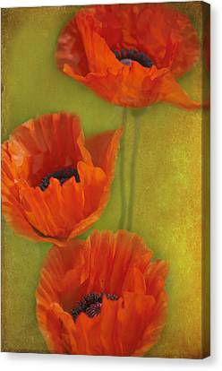 Three Poppies Canvas Print by Carolyn Dalessandro