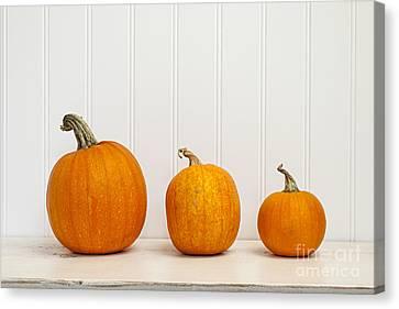 Three Sizes Canvas Print - Three Pumpkins by Elena Elisseeva