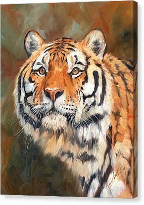 Tiger Look Canvas Print by David Stribbling