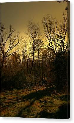 Time Of Long Shadows Canvas Print by Nina Fosdick