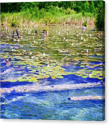Torch River Water Lilies Canvas Print by Michelle Calkins