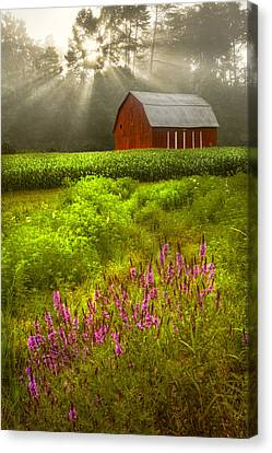 Garden Scene Canvas Print - Touched By The Sun by Debra and Dave Vanderlaan
