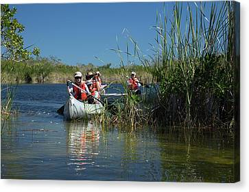 Tourists Canoeing In Mangrove Swamp Canvas Print