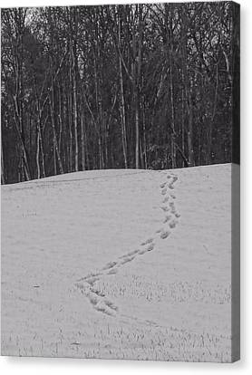 Tracks In The Snow Canvas Print by Dan Sproul