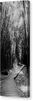 Trail In A Bamboo Forest, Hana Coast Canvas Print by Panoramic Images