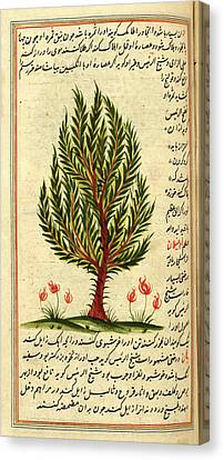 Tree Canvas Print by British Library
