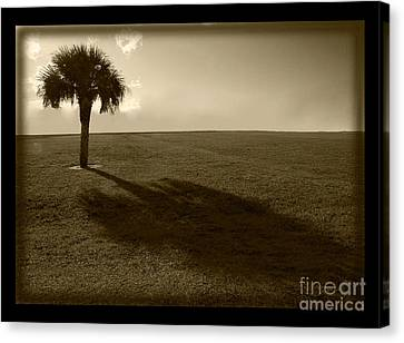Tree Canvas Print by Bruce Bain