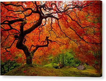 Tree Fire Canvas Print by Darren  White