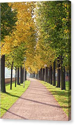 Tree-lined Pathway Along Elbe River Canvas Print by Michael Defreitas