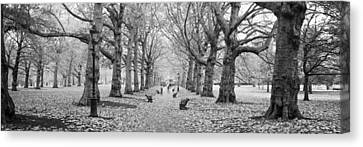 Trees Along A Footpath In A Park, Green Canvas Print by Panoramic Images