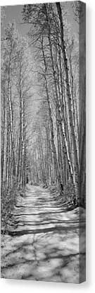 Trees Along A Road, Log Cabin Gold Canvas Print by Panoramic Images