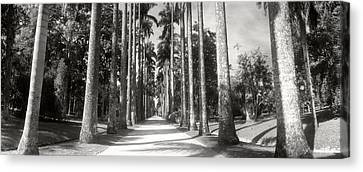Garden Scene Canvas Print - Trees Both Sides Of A Garden Path by Panoramic Images