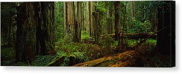 Forest Floor Canvas Print - Trees In A Forest, Hoh Rainforest by Panoramic Images