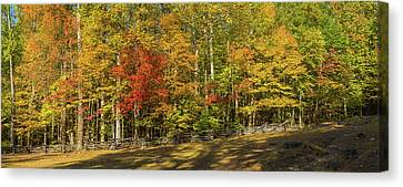 Trees In A Forest, Roaring Fork Motor Canvas Print by Panoramic Images