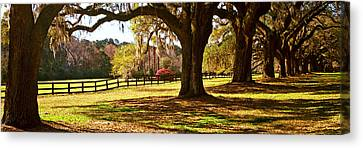 Trees In A Garden, Boone Hall Canvas Print by Panoramic Images