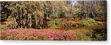 Trees In A Garden, Middleton Place Canvas Print by Panoramic Images