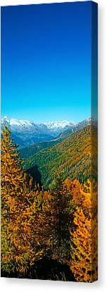 Trees In Autumn At Simplon Pass, Valais Canvas Print by Panoramic Images