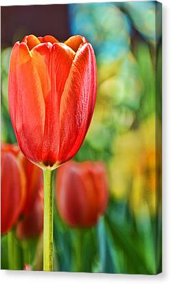 Tulip Canvas Print - Trendy Tulips by Jeanne May