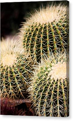 Canvas Print featuring the photograph Triple Cactus by John Wadleigh