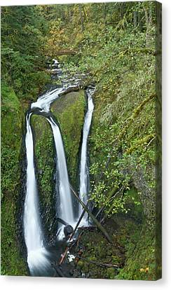 Triple Falls On Oneonta Creek, Columbia Canvas Print by William Sutton