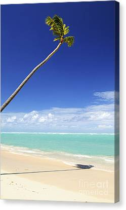 Tropical Beach And Palm Tree Canvas Print