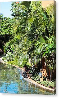 Tropical Garden Canvas Print by Tom Gowanlock