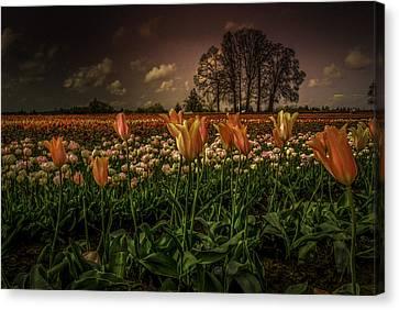 Tulip Festival Canvas Print by Jean-Jacques Thebault