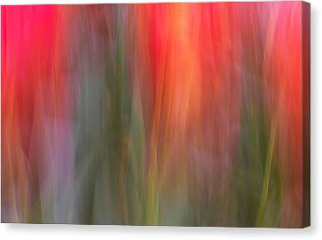 Tulip Waves Canvas Print by Marion McCristall