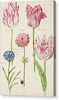 Tulips Canvas Print by Nicolas Robert
