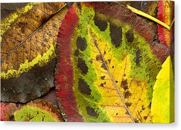 Turning Leaves Canvas Print by Stephen Anderson