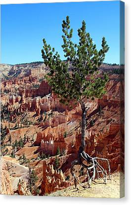 Canvas Print featuring the photograph Twisted by Jemmy Archer